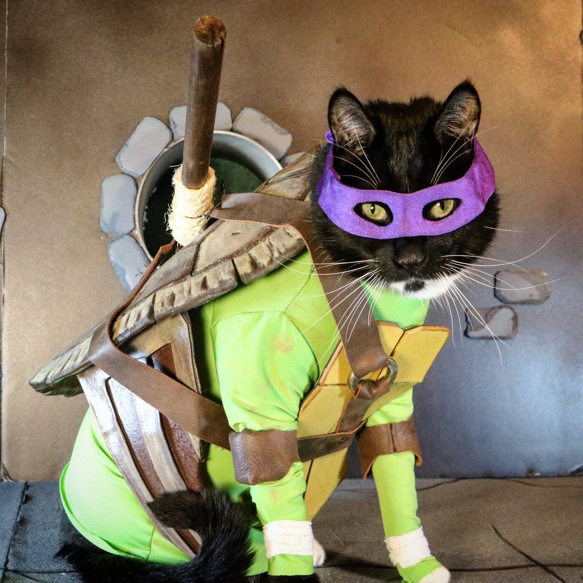 Donatello is best Turtle.  After all, trending order would never lie.  #TMNT