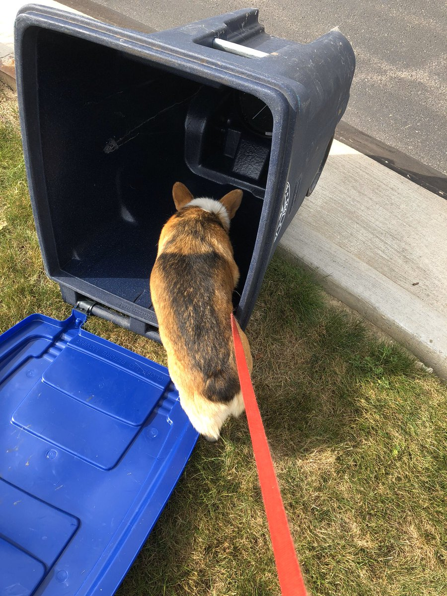 @duchessgoldblat #DGDS Davy reminds you to recycle.