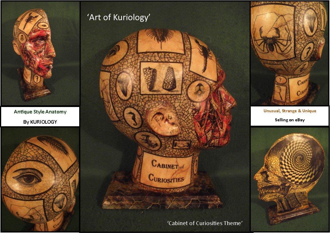 #Steampunk-ish ⚙️ Awesome of the Day: #CabinetofCuriosities Anatomical Cross Section #Skull 💀 #Anatomy #Sculpture on @Ebay via @strangecurios #SamaCuriosities 👀