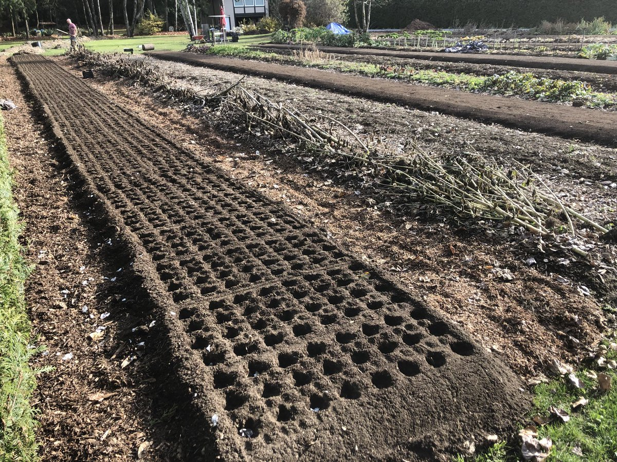 We are finally finished planting!!! Another 3,100 #garlic cloves in the ground for a total of 8,100 cloves planted this year!  #smallfarm #garlicfarm #farmdirect #local #natural #mapleridge #farmstand #redrussiangarlic #planting #plantinggarlic #bcfarmfresh https://t.co/Ysj2gaudMc