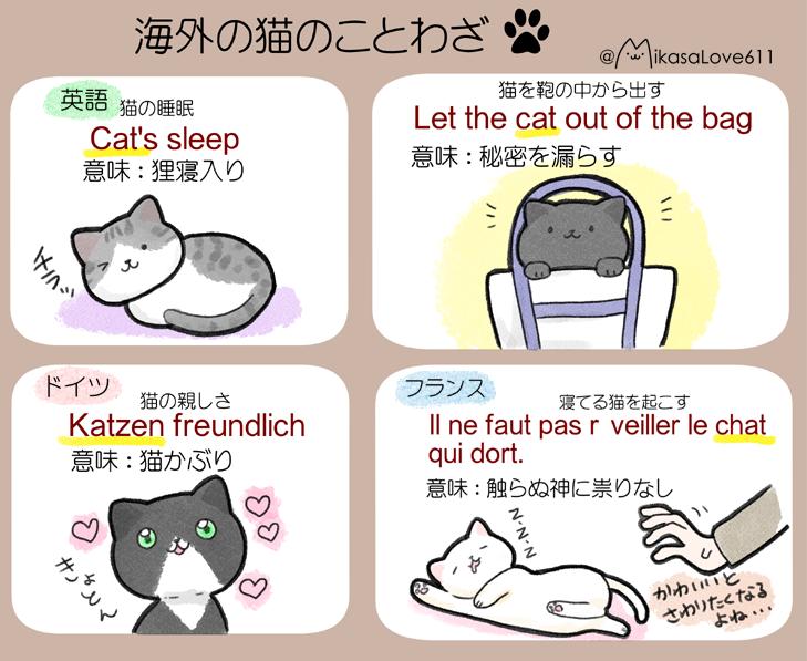 あなたはいくつ知ってる?日本と海外の猫に関することわざ12選!