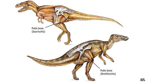 Cosmo Sapiens Astronomia Ar Twitter Los Dinosaurios Ornitisquios Ornithischia Se Clasificaban En Tres Subordenes Principales Ornitopodos Marginocefalos Tireoforos Https T Co Tgz4odbo8h Pisanosaurus mertii hasta el día de la fecha era considerado como el dinosaurio ornitisquio más desde entonces fue considerado una especie clave en la evolución de los dinosaurios ornitisquios. dinosaurios ornitisquios ornithischia