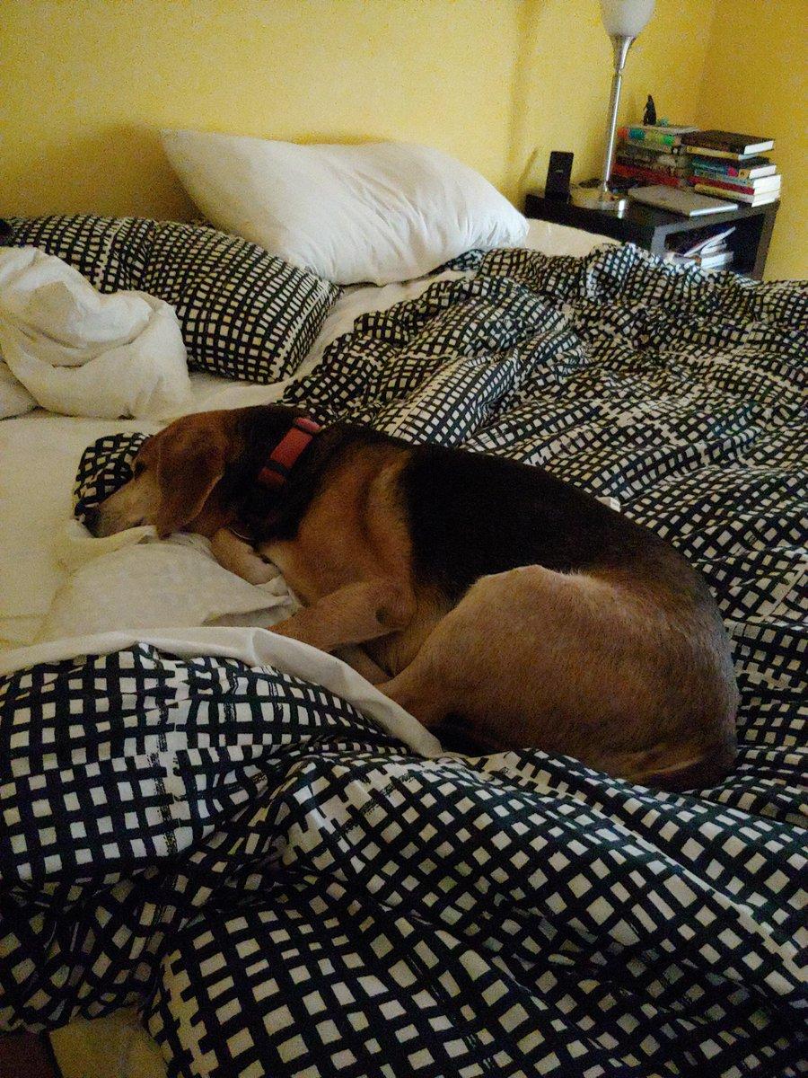 @duchessgoldblat Dexter is sorry he missed it, but he slept in. #DGDS