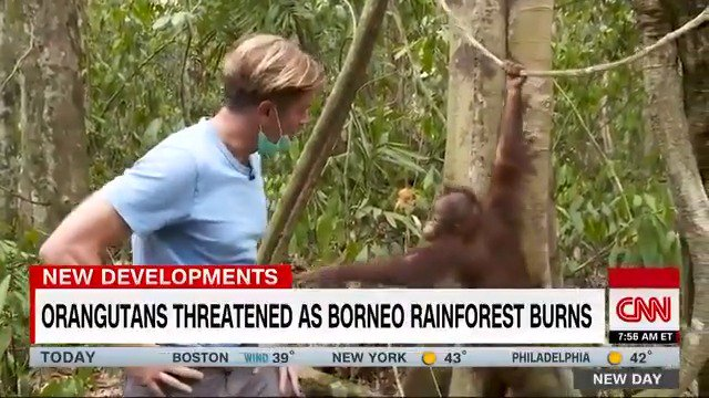 Orangutans are being threatened at one of the worlds largest rainforests in Indonesia. The fires in Borneo are a largely man-made phenomenon to grow a valuable cash-crop, but it's putting the endangered animal at risk. cnn.it/2PZBel7