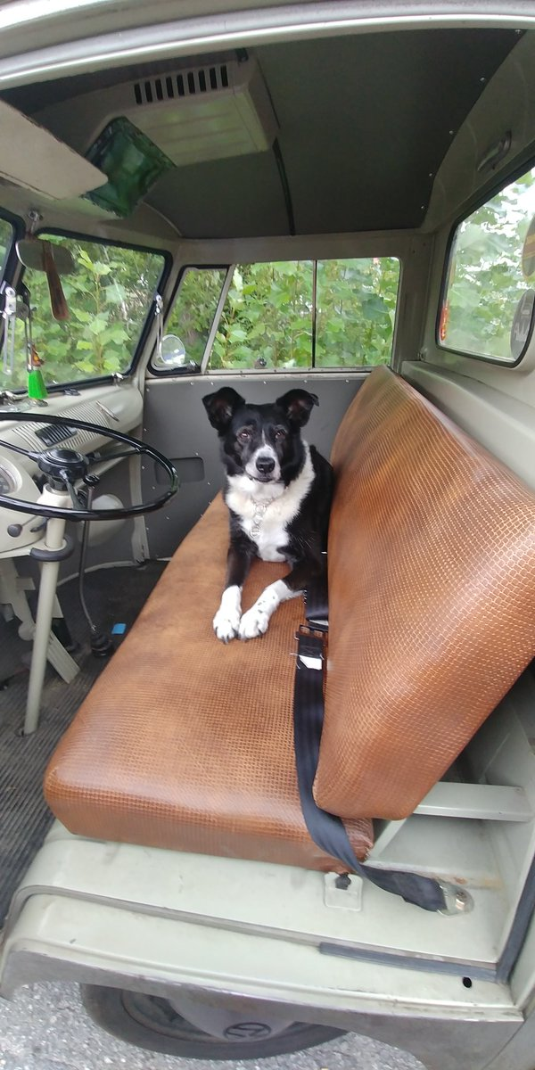 @duchessgoldblat Molly says welcome aboard her vintage VW, she drives stick. Buckle up #DGDS