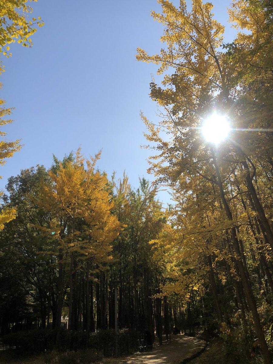 🌳어제의 긴 남준 투어&아미 모임 후기🌳 오후 12시경 까사언니 @Soul_Casa 와 #서울숲 투어 시작! 날도 좋고 준이 벤치 곁 은행 나무들은 더 반짝이고 세상 행복한 서울숲 투어💜로 오늘의 긴 투어 시작+ #남준 @MoNiJunNi #우리의_봄날_1000일의_나날 #SpringDay1000Days @BTS_twt