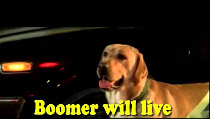 @PAMVLLO - Boomer will live! - Okay, Boomer - ...