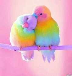 The power of  love <br>http://pic.twitter.com/dQN8ZRaOq0