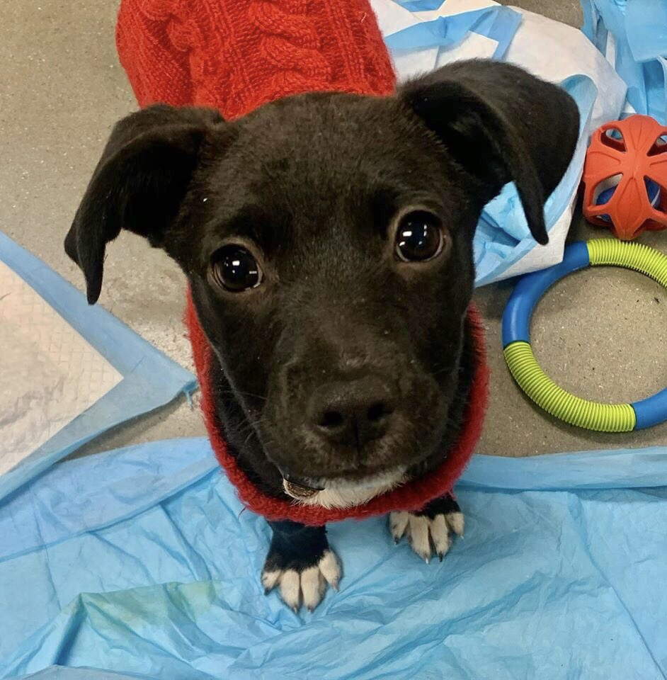 Little boy Winslow Pup One's the only pup who didn't get adopted today at PetSmart's National Adoption Weekend, but he's back at the Refuge waiting to meet you and find a happy home. Stop by and adopt him this weekend - or RT to help this li'l guy out!