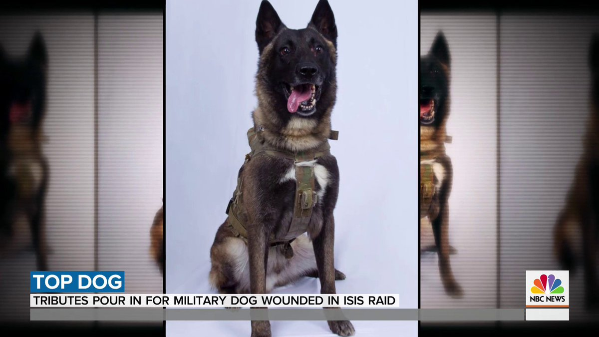 One of the heroes in the raid that killed the leader of ISIS is a military dog that suffered some minor injuries. The canine's name is classified, but its picture – taken before the raid – was declassified, giving us a glimpse of the brave pup, @joefryer reports.