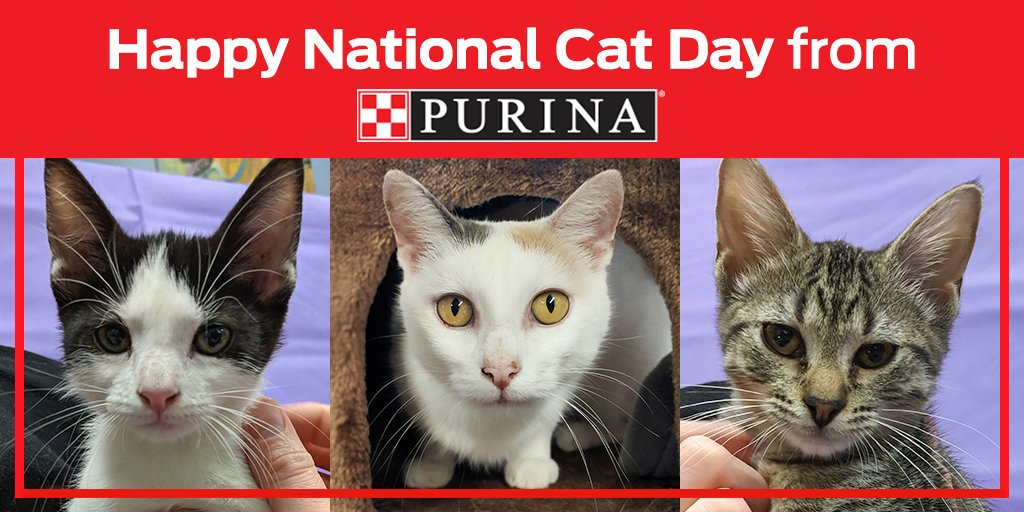Purina On Twitter Happy Nationalcatday From Purina Our Employees Volunteered At Mehumanesociety Met Lovely Adoptable Cats Of All Ages Purina Partners With Adoption Centers Like This One To Help Pets Find