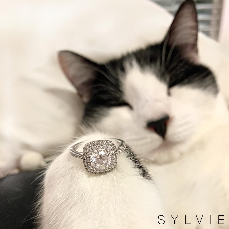 """Will you meowy me?"" We say yes! 🐱@olithetuxedokitty is celebrating #nationalcatday with this gorgeous #doublehalo cushion cut engagement ring! #Diamonds & #Cats - it doesn't get much better! (Style shown: S1097) #SYLVIE #EngagementRings #JustEngaged #Engaged #SylvieCollection"