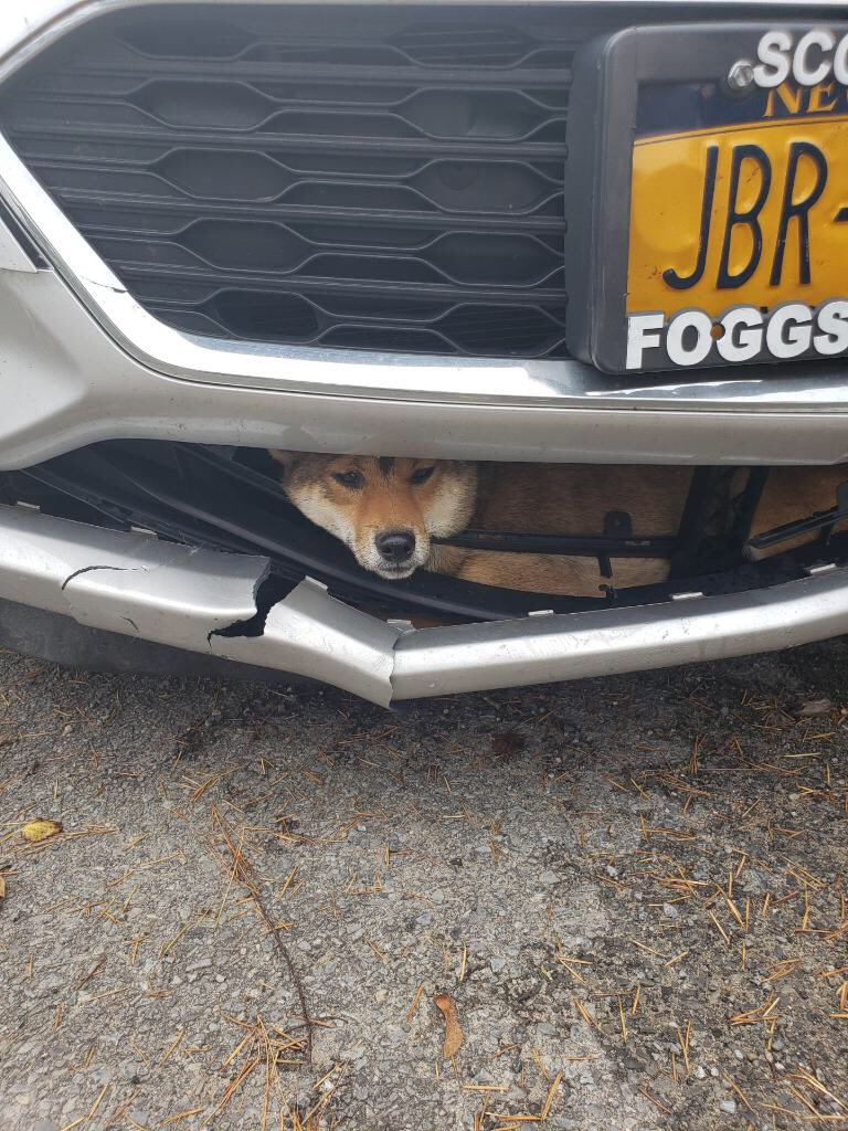 Dog struck by car rides inside bumper for miles