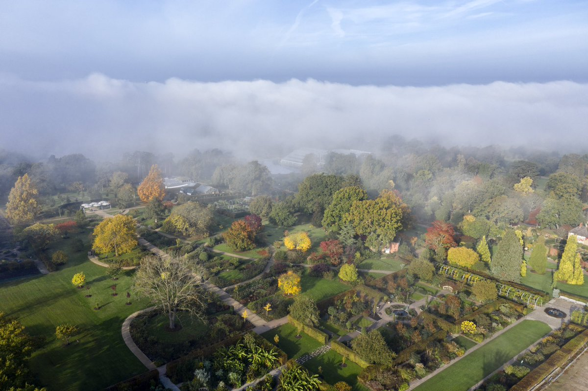 RHS Wisley showing off its autumn colours in the fog. Shot for the Royal Horticultural Society. @RHSWisley @The_RHS @Matthew_Pottage #autumn #colours #bigladder #drone #drone #dronephotography