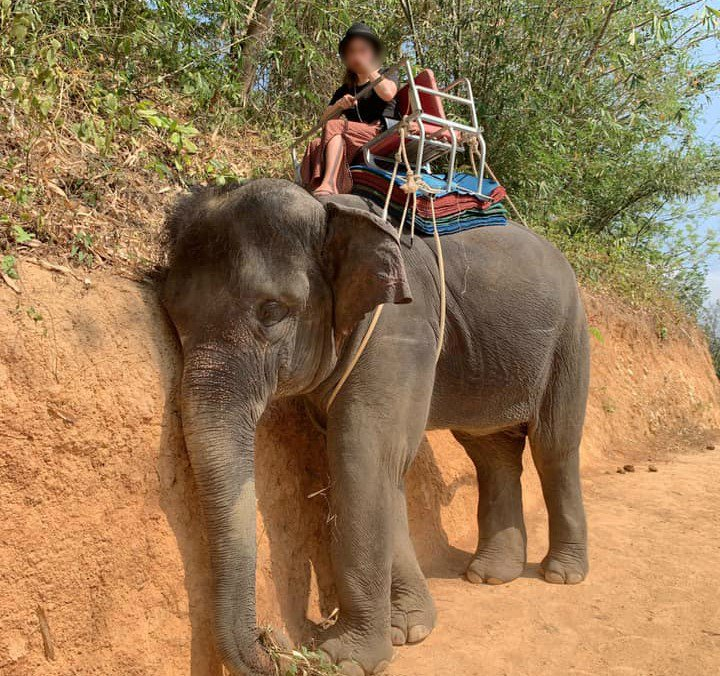 A picture of utter exhaustion & despair, an Asian elephant worked towards death to give rides to tourists. Numerous UK companies send tourists to venues where elephants are brutalised till they can take no more. Sign STAE's petition to ban this forever: