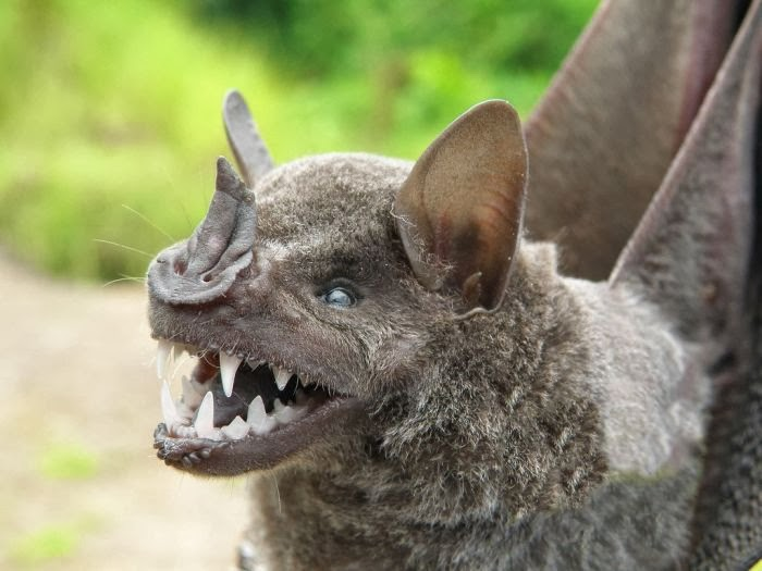 самые пугающие животные в мире фото защитит каждого члена