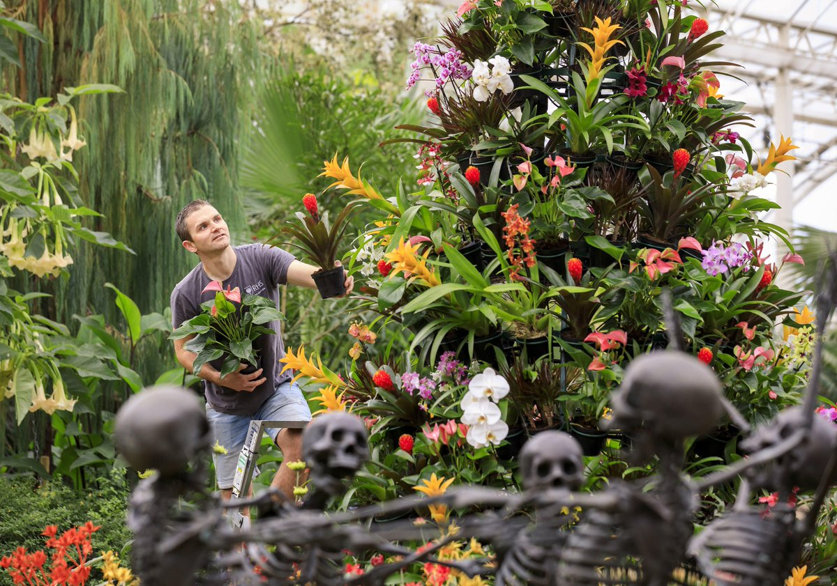 Visit the Glasshouse at @RHSWisleyto see a colourful eye-catching display inspired by the Mexican Day of the Dead festival, where vibrant tropical plants meet skeletons! 🇲🇽 The display runs from 26 October to 17 November: rhs.org.uk/gardens/wisley…