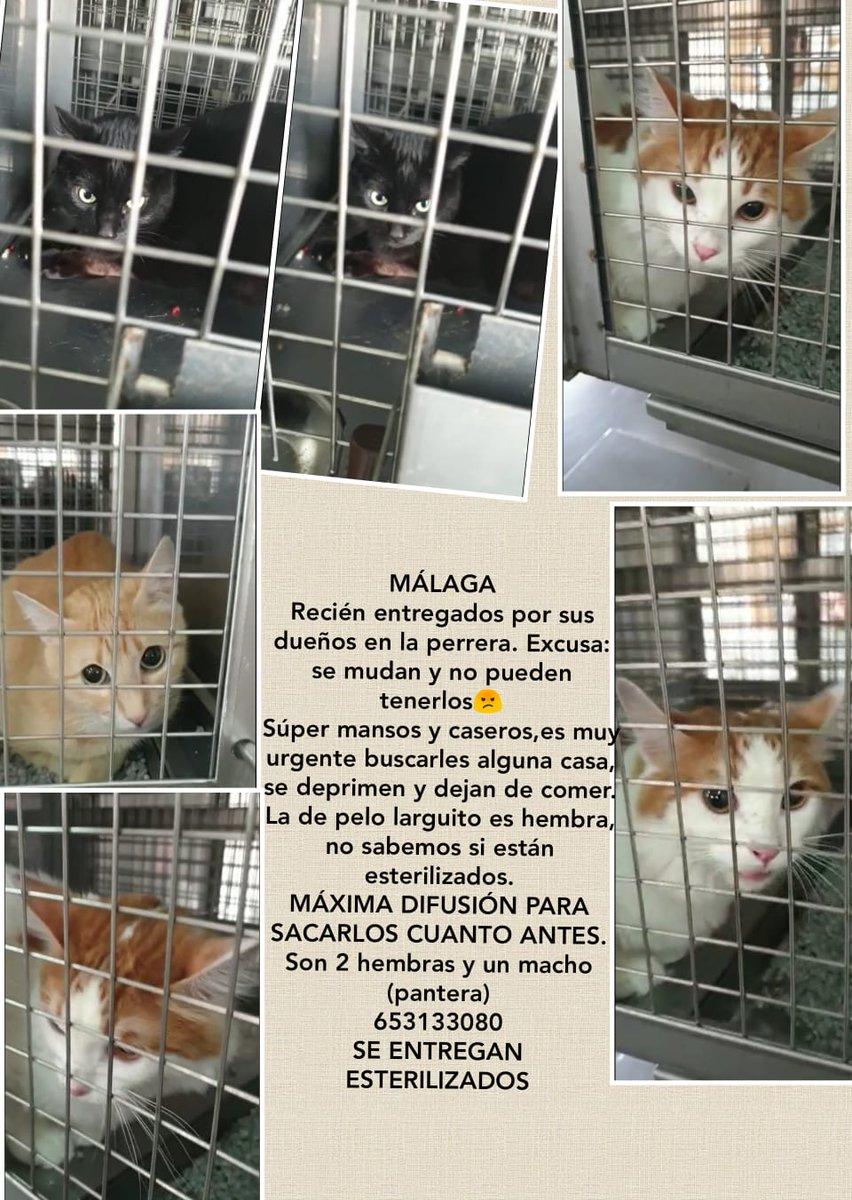 #ESPAÑA #Málaga SOS¡¡GATITOS EN LA PERRERA¡¡O SALEN O SERÁN SACRIFICADOS¡¡SE RUEGA DIFUSIÓN¡¡Interesados directamente al contacto¡¡ #ADOPTA SALVA¡