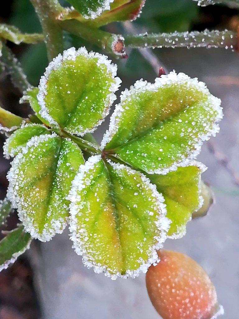 Gertrauds Tweet Guten Morgen Winterzauber Am