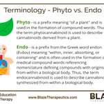 #BlazeEducation  Take home message: #Phytocannabinoids are not the same molecules as #endocannabinoids.  Interested in learning more about endocannabinoids & phytocannabinoids? Check out our #Cannabis #Medicine Certification Programs at https://t.co/S2tPZ1fSND.   #blazetherapy