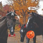 Happy Halloween from the #WarDancer family! My kids and I are getting into the spooky spirit. 🎃🐴🍬