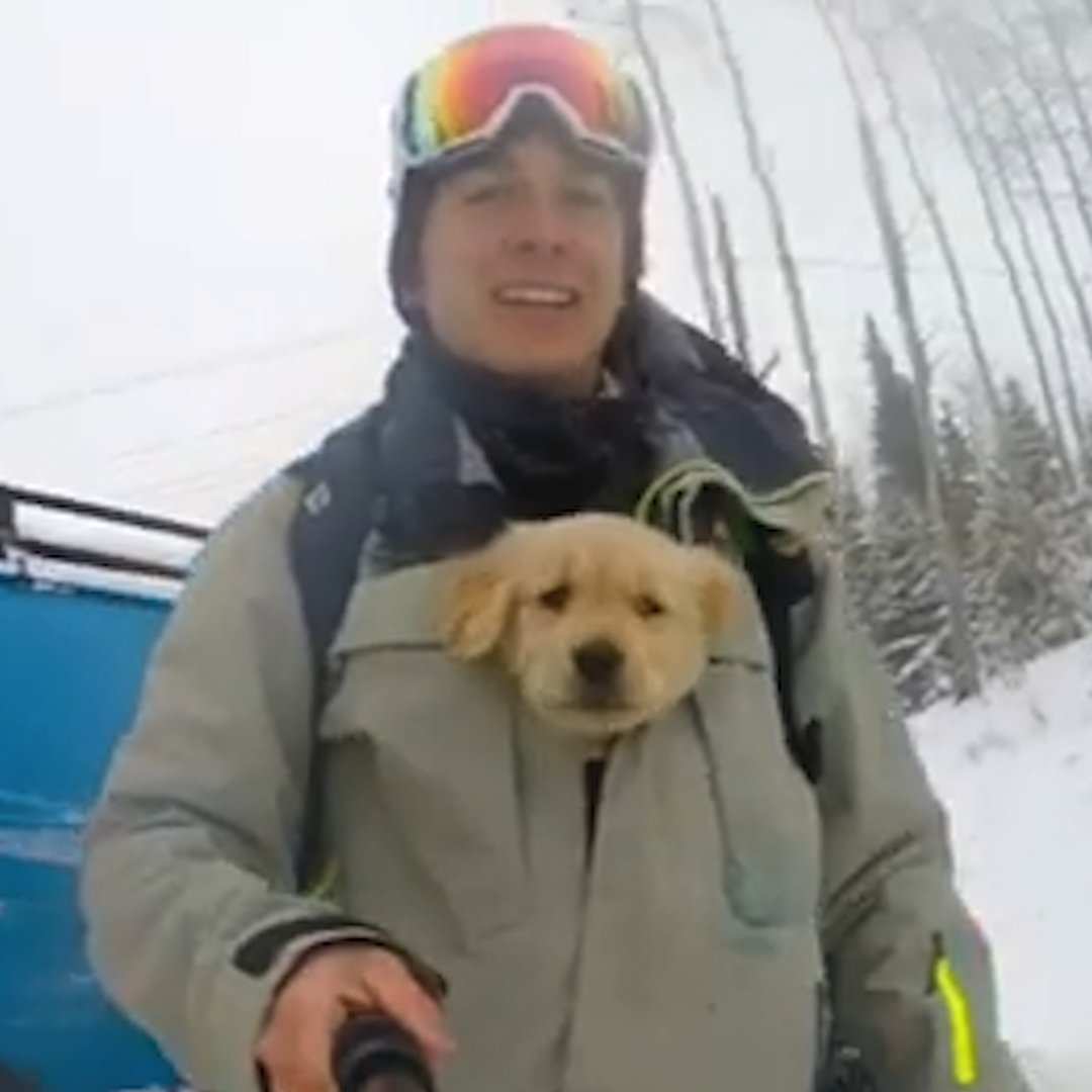 🎧 Watch this #puppy grow up into an extreme athlete!  ❤️#LoveStory of Kicker the #Dog and #Andrew Both #Extreme #Athletes and Total #SoulMates 💞 #Goldens  💛 via @Dodo @CONTEMPRA_INN 🌹