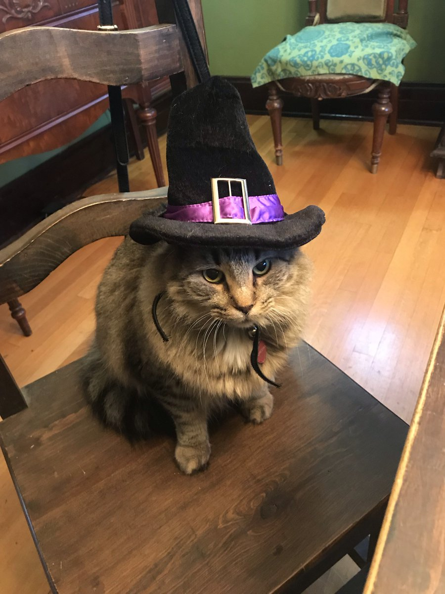 Have a purrr-fect and safe #Halloween, El Paso! Princess is all dressed-up and ready to have fun – what about you?