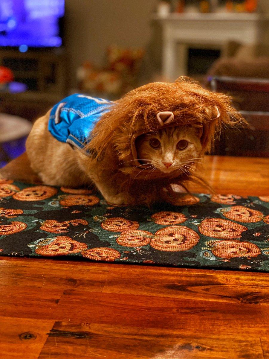 Happy Halloween from Rory! Go Lions!!!! @Lions @FOXSportsDet @freep @PrideOfDetroit @detroitnews #Rory #OnePride #GoLions #Halloween https://t.co/5goXtrCyHn