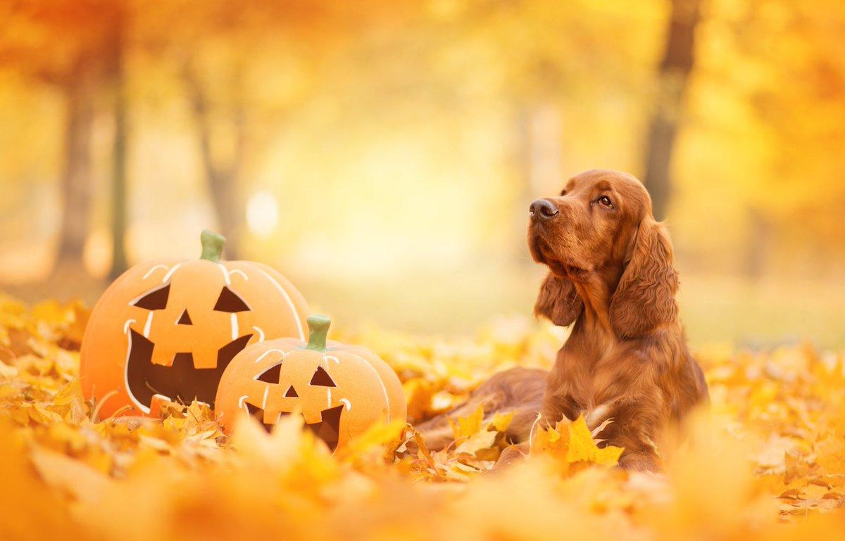 @msppalt @PPersnickety @mill123and @JaniceKetterha2 @osiriscarter9 @ScarletAvengers @strom_annette @gr8fulchik @hwmnylx @CynGal2 @ShaunaAriaDDay @kim @PetraMcCarron2 @chukosh @SherResistsH8 @lunaticopresid1 @BrensJewels @Shelly15208 TY Ms PP🎃👻🌊 Happy Halloween