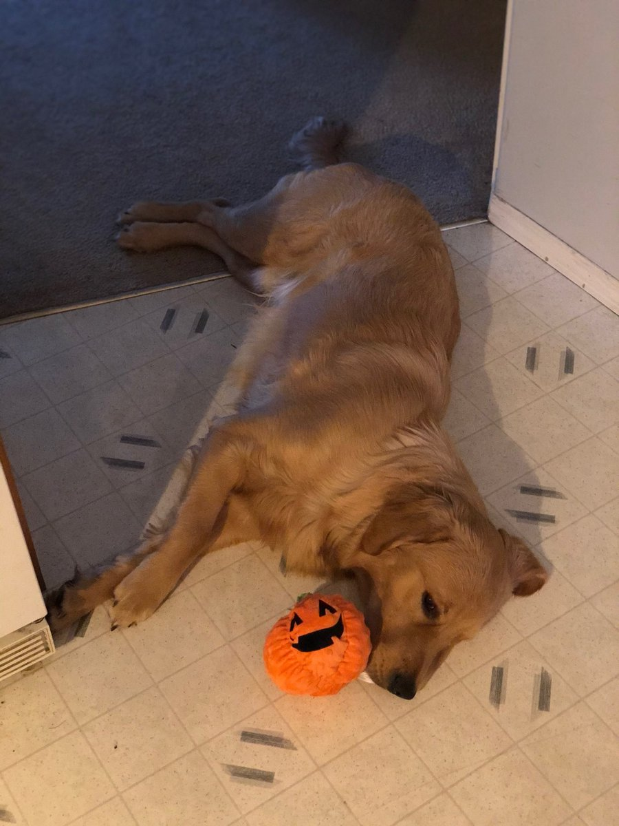 My grandson's dog Saint he is so loved 🎃