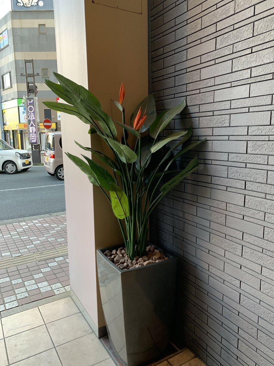 浜松駅、駅南某複合ビルエントランスにうちのストレチアが飾られてる✨ このサイズ感じだと、存在感バッチリだな👌👌  #fakegreen #ストレチア #極楽鳥花