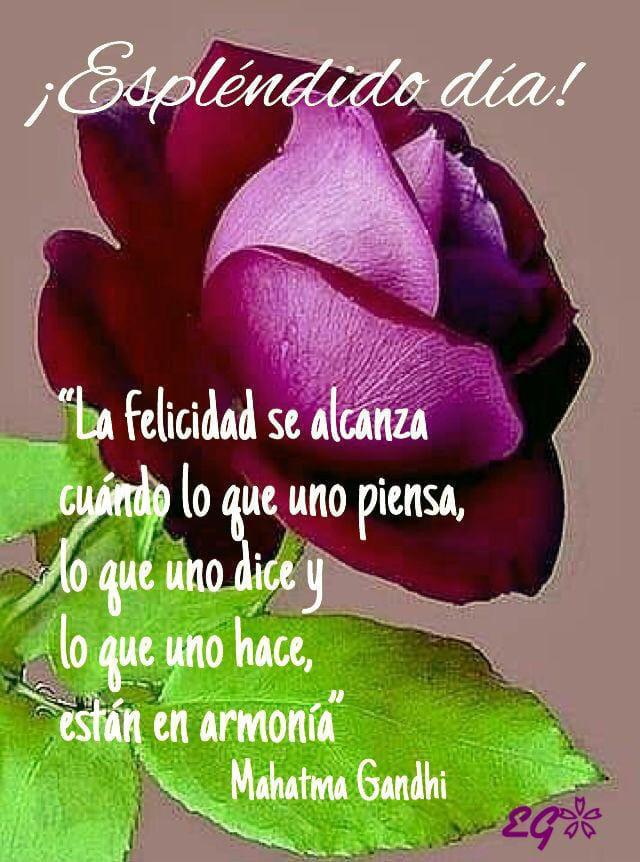Guadalupe Lm S Tweet Buenos Dias Amigas Y Amigos Muy