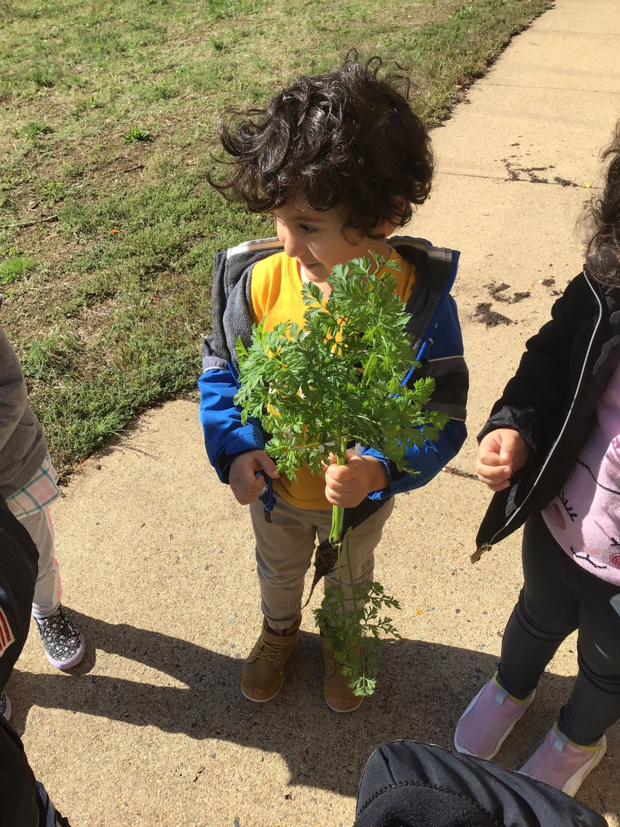 Last crop of the season: okra, carrots and beans. Our last volunteer garden day is tomorrow, November 2 from 9 to 12. <a target='_blank' href='http://twitter.com/APS_EarlyChild'>@APS_EarlyChild</a> <a target='_blank' href='http://search.twitter.com/search?q=hfbtweets'><a target='_blank' href='https://twitter.com/hashtag/hfbtweets?src=hash'>#hfbtweets</a></a> <a target='_blank' href='https://t.co/L5i3F6hJKY'>https://t.co/L5i3F6hJKY</a>