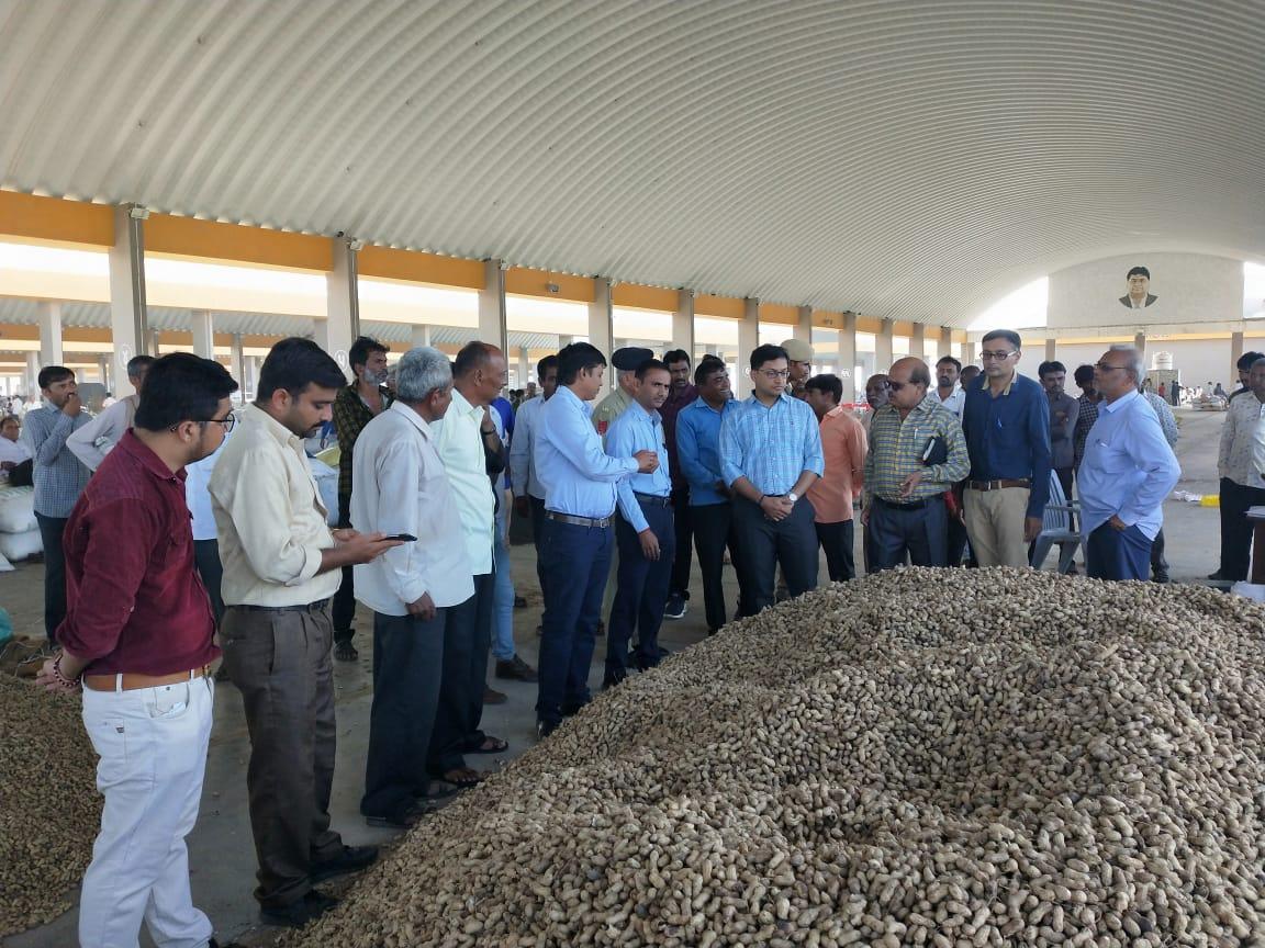 MSP procurement of groundnut suspended in Gujarat till November 15 due to rain
