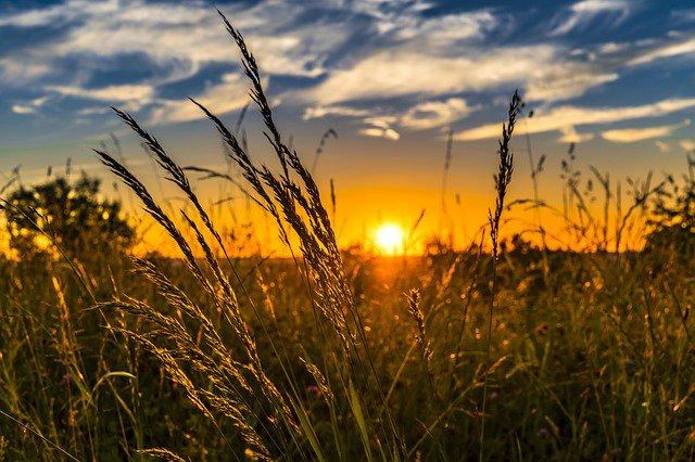 A través del acuerdo suscrito por Margarita Ríos-Farjat, jefa del SAT, y por Francisco Javier Delgado, director general de Agroasemex, se compartirá la información de más de un millón 300 mil agricultores a partir de enero del próximo año.https://www.24-horas.mx/2019/10/31/sat-y-agroasemex-brindaran-mayor-seguridad-tributaria/…