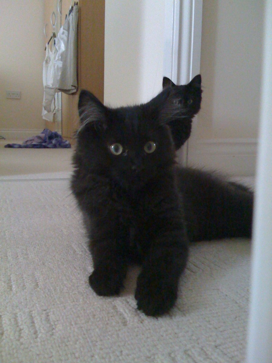 Dexter 11 years ago as a kitten. God he was cute