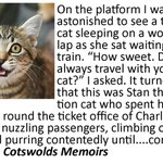 Image for the Tweet beginning: #Read this #railway station cat's