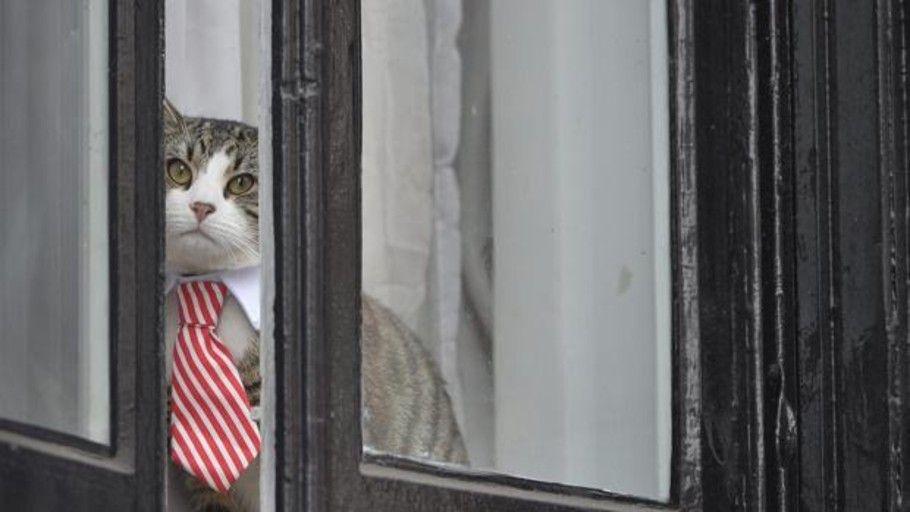 test Twitter Media - Si eres #autónomo o empresario, y también amante de los #gatos, ¿por qué no trabajar con ellos cerca para eliminar estrés? https://t.co/OgH58q9sAv https://t.co/g7QRxVIAiX