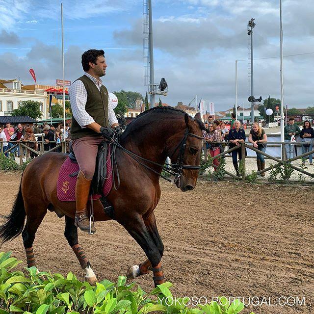 test ツイッターメディア - リスボンから車で1時間半、ゴレガで毎年行われる馬の祭典、Feira Nacional do Cavalo。今年は11月11日までの開催です。多くの屋台も出店し、馬も祭りも楽しめます。 #ポルトガル #祭り https://t.co/5DJ1Rkrlm2