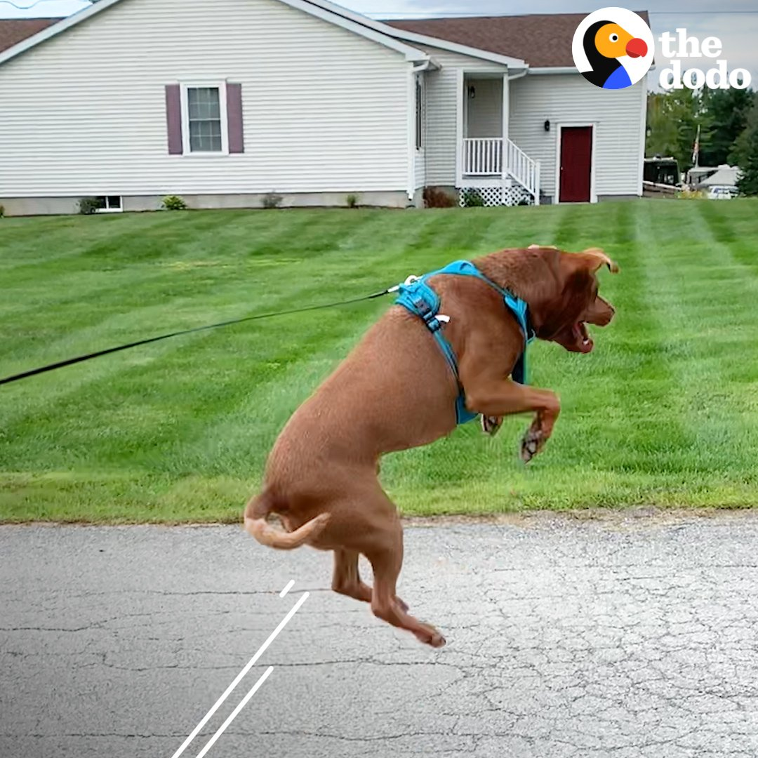 Shelter dog cant stop jumping for joy ❤️