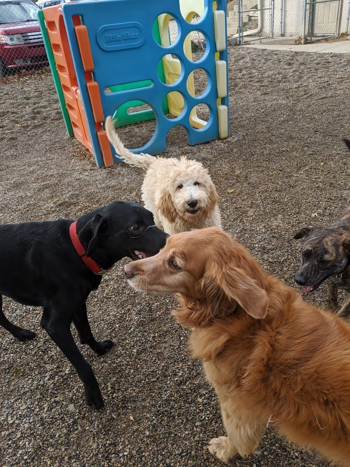 Ruger, Tucker, Rosie, and Gwen enjoy each other.