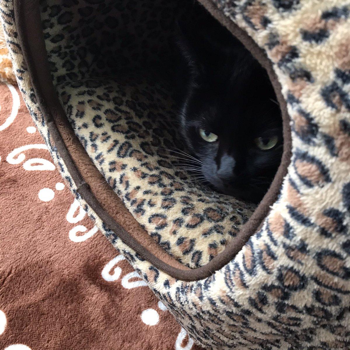 朝から寒いって言われヒーター出したり、布団干したり、買い物行ったりしてたら、もうお昼😂午後は掃除して、シーツ冬物に替えてと晴れると忙しい💦猫様にも〜ベッド取り合いになるので買ったわ😻ミアが入ってる所にモア参入〜(「◣д◢)「シャアーされるの😿
