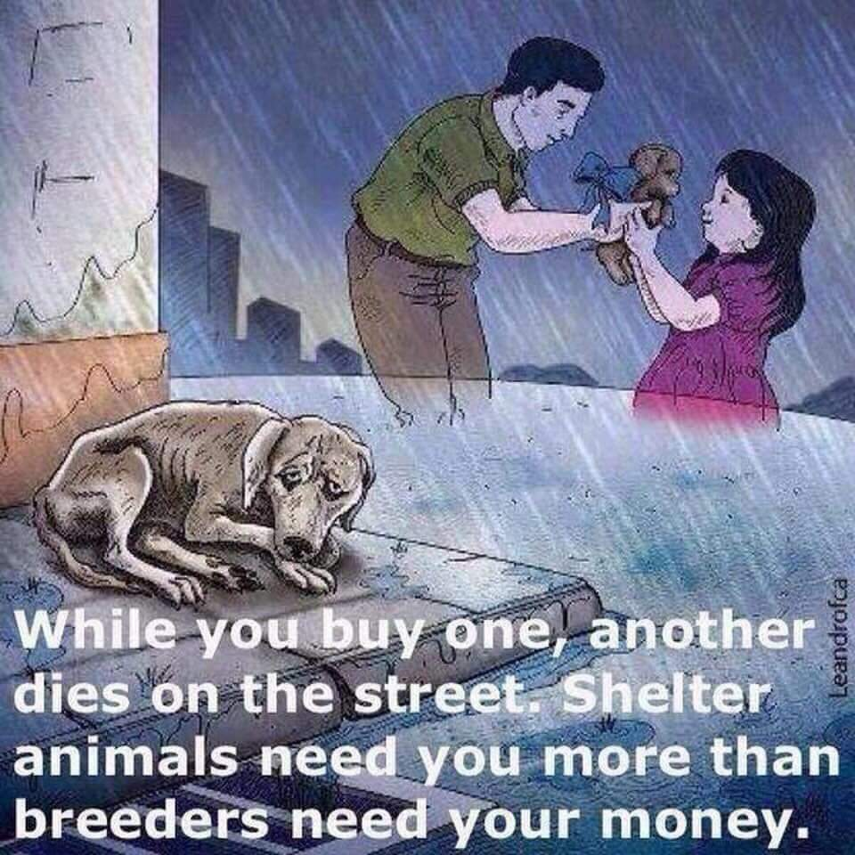 #TuesdayThoughts Don't Buy Whilst Shelter Pets Die!#AdoptDontShop #LucysLaw #VictoriasLaw