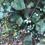 幼い頃に見つけた宝石のような実との再会!色とりどりのパステルカラーがすごく綺麗!