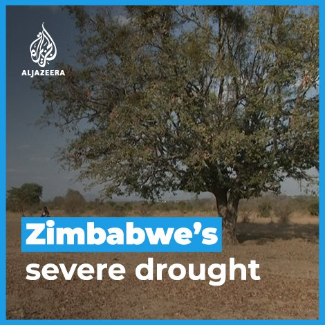 Zimbabwe is experiencing one of the worst droughts in history.