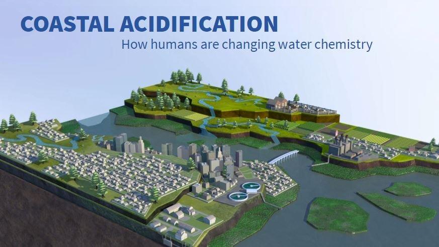 coastal acidification