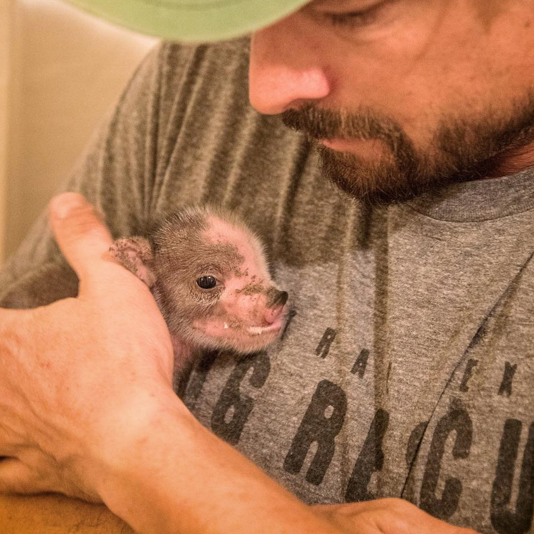 """This woman bought a """"mini"""" pig ... and then"""