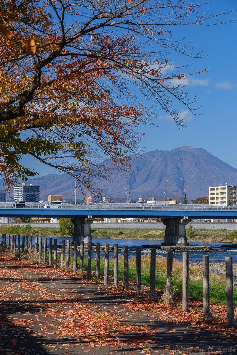市街地も #紅葉 から #落葉 へ‥‥‥  2019/11/5 撮影   #岩手 #盛岡 #北上川 #岩手山