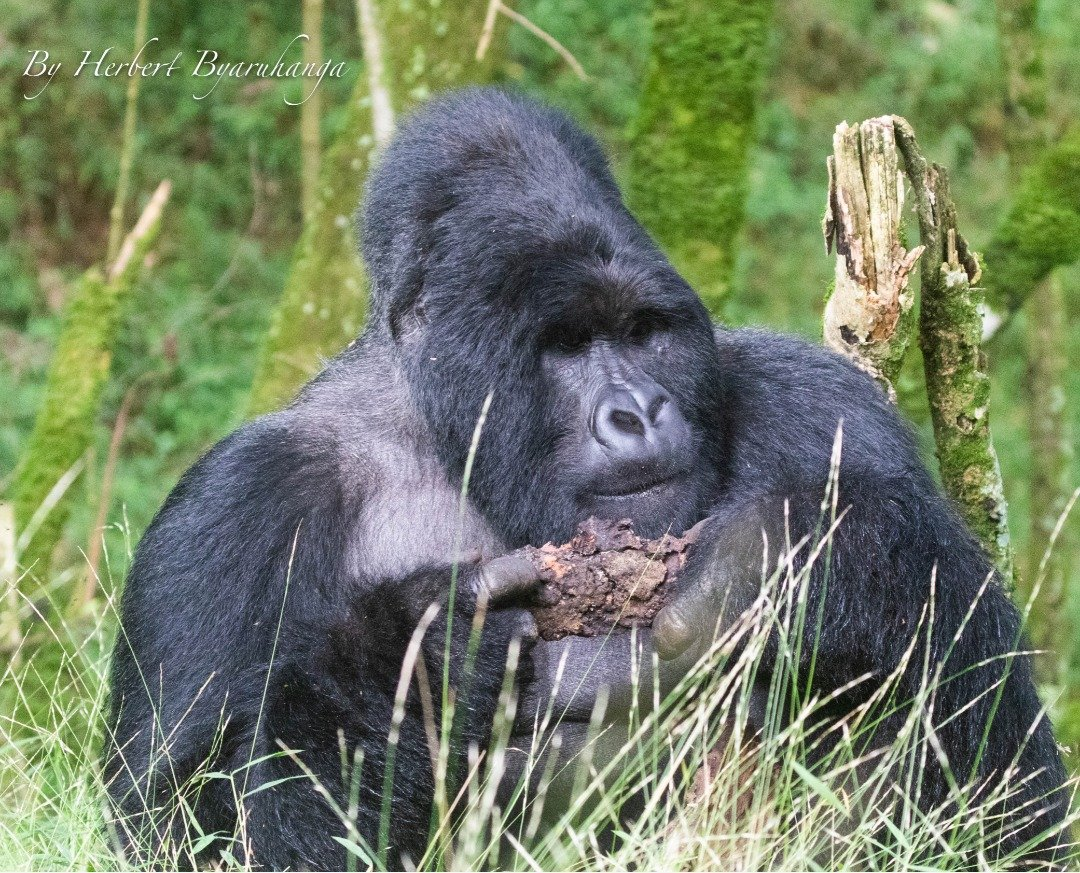 Once in a short while, go someplace you've never been before and you will be amazed by what you will find https://t.co/1ecD9fKcjU https://t.co/PtMeTwgcF3 https://t.co/fO8UWQdqoC #holidayafrica #Rwandagorillasafaris #Congogorillasafaris https://t.co/4GC44GK8EU