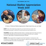 Image for the Tweet beginning: In honor of National Shelter